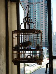ご近所の小鳥さん