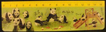 国立科学博物館のパンダの定規